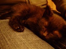 Mandarina slaapt