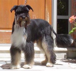 hond model 1