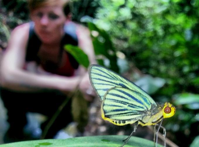 vlinder trekking koh rong