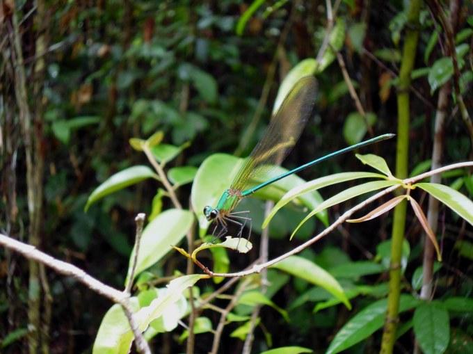libelle trekking koh rong
