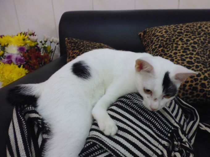 cat cafe phnom penh