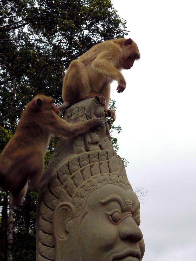 aapjes bij angkor thom